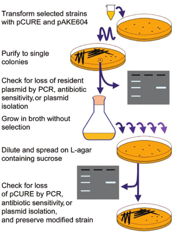 Overview of the pCURE method.
